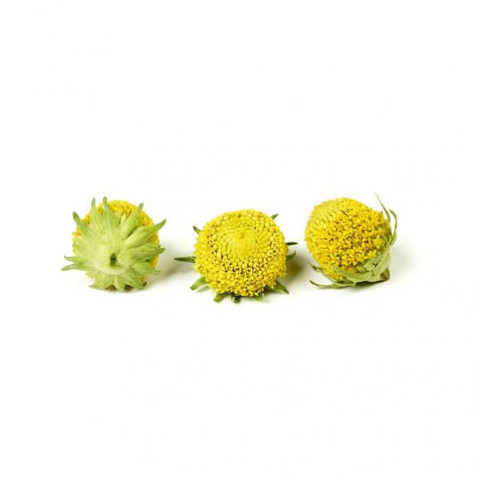 Acmella (electric blossom) liofilizata (20g), Sosa