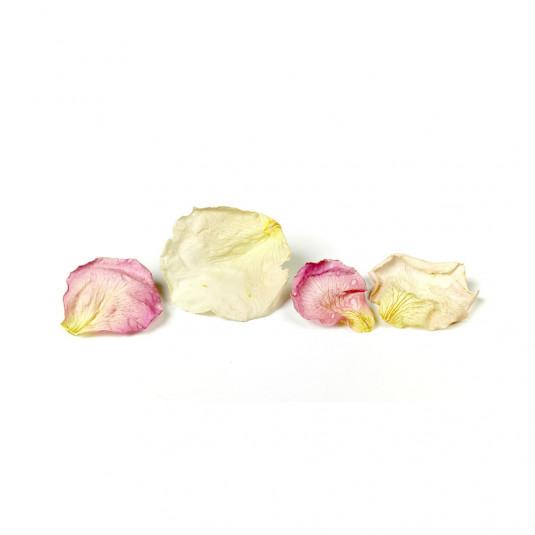 Petale albe de trandafir liofilizate (7g), Sosa